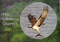 The Lakeland Ospreys