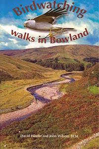 Birdwatching Walks in Bowland